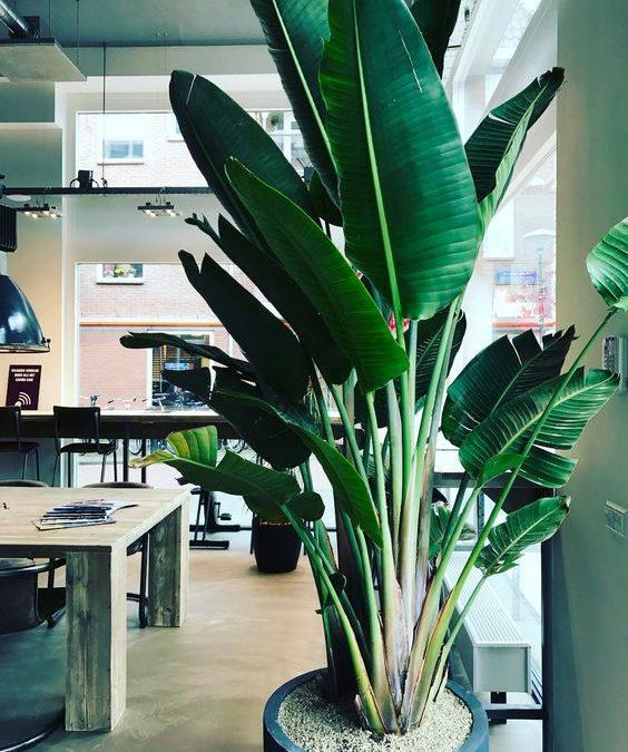 Hoeveel planten staan bij jou in de kantoortuin?